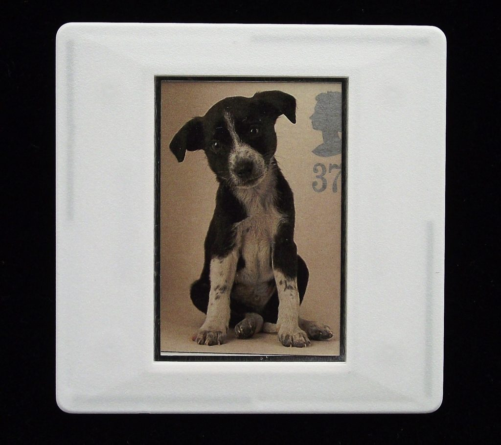 Puppy brooch - illustration by Tony Evans - Stamp Style animal brooches