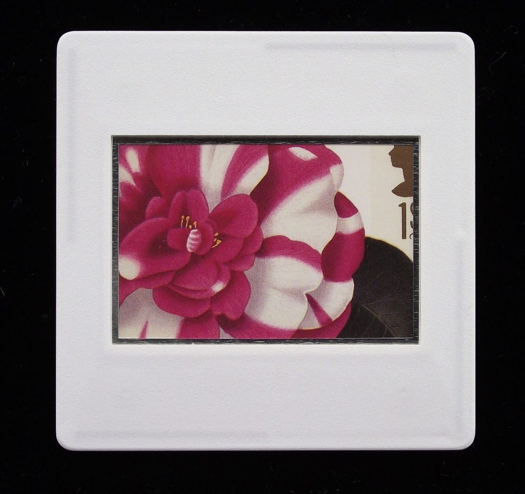 Camelia Japonica brooch