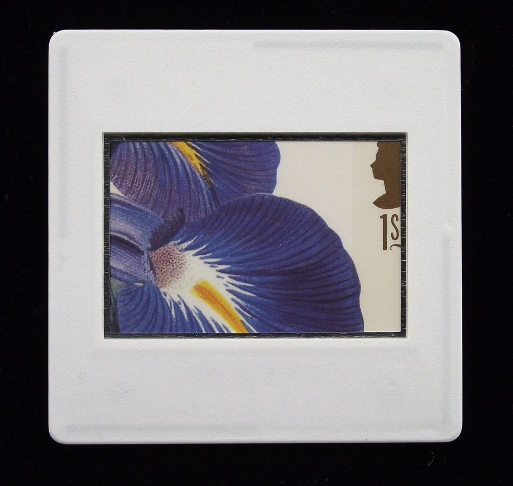 Iris Latifolia - flower brooch