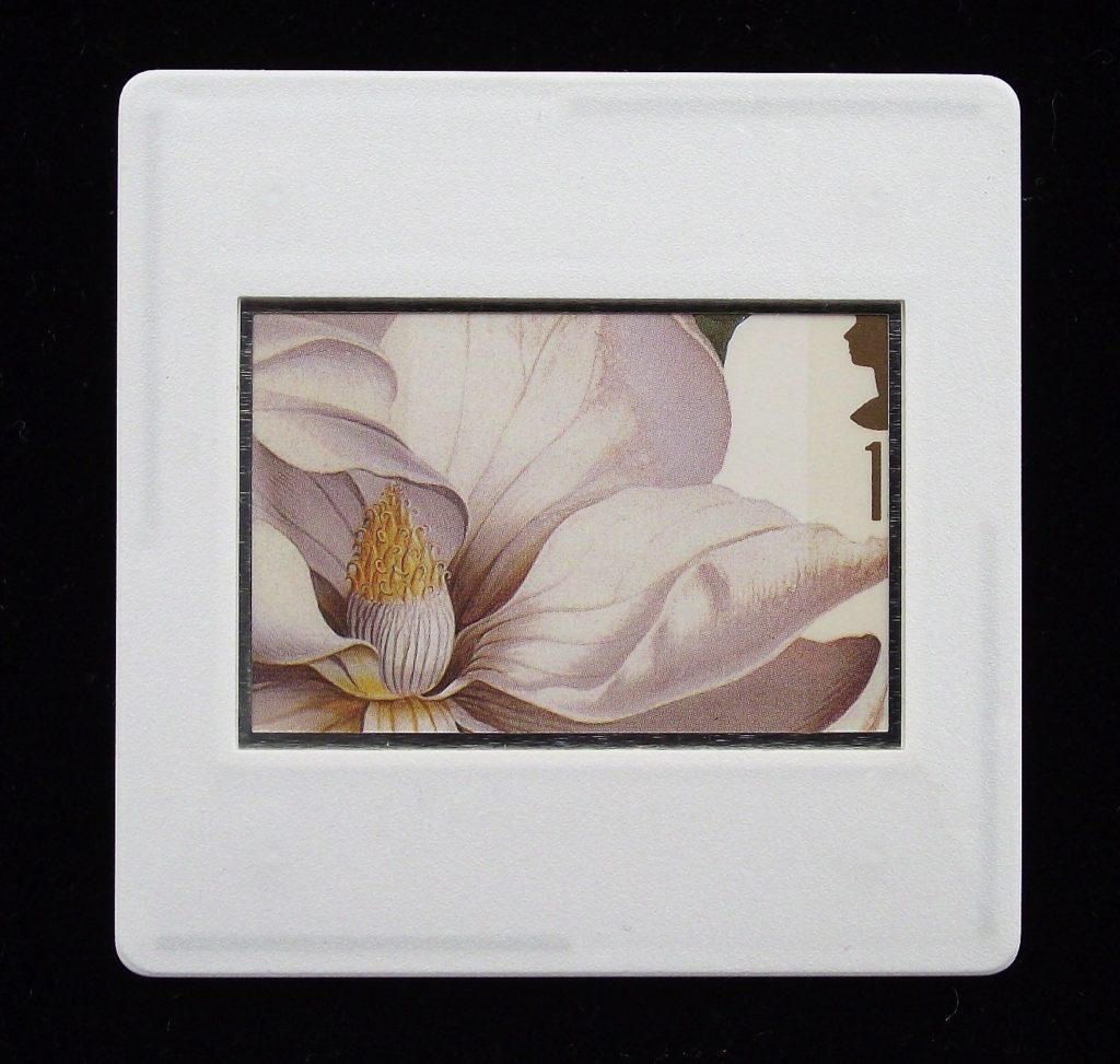 Magnolia Grandiflora - flower brooch