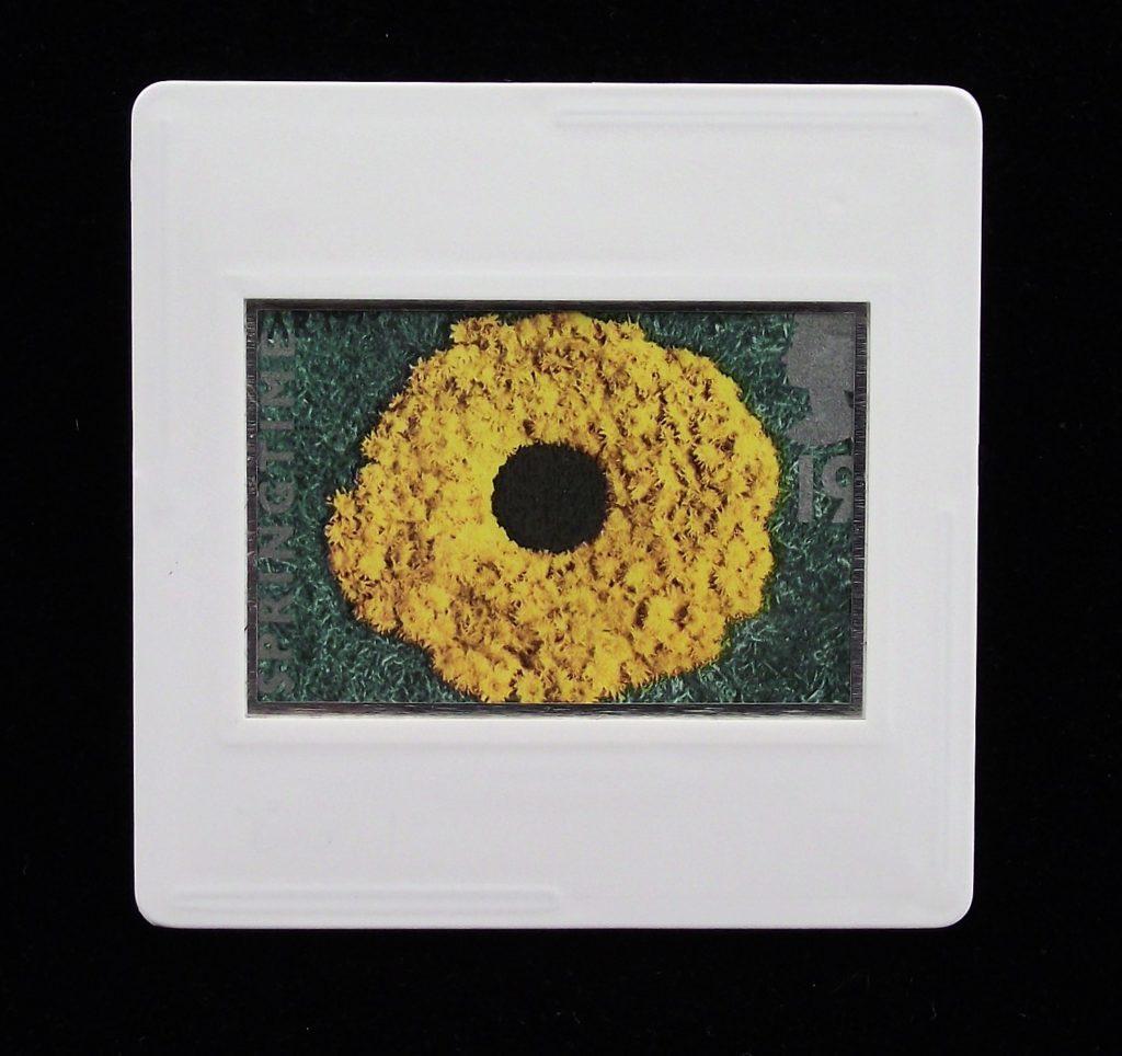 Dandelions brooch - Andy Goldsworthy