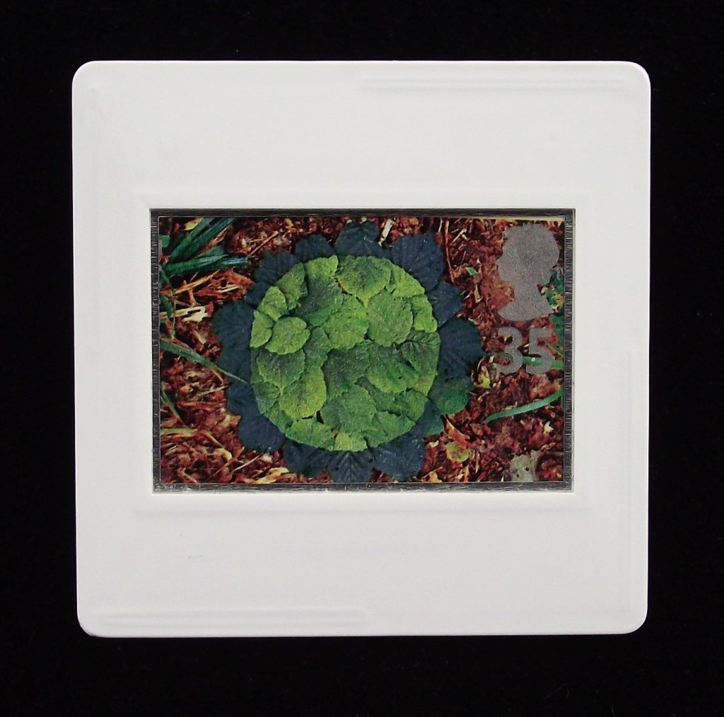 Hazel Leaves brooch - Andy Goldsworthy
