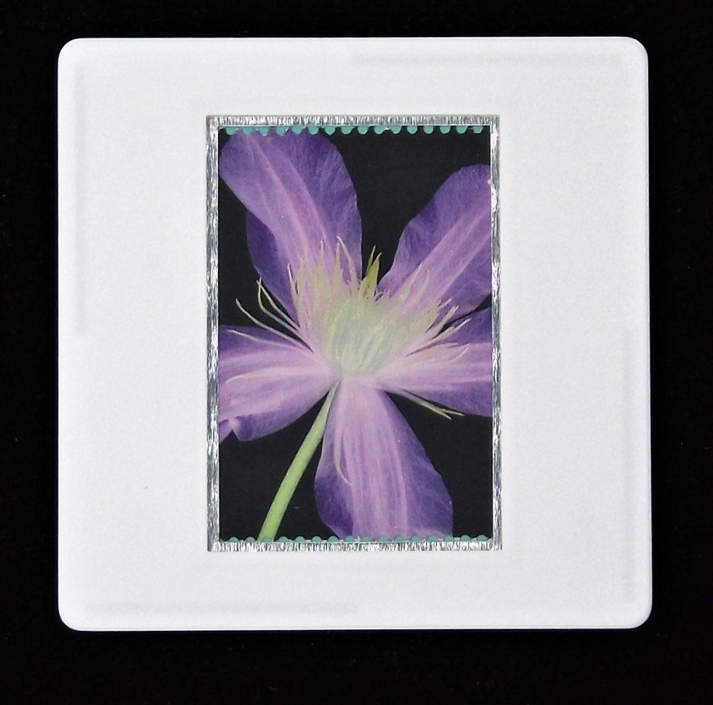 Clematis brooch - RHS - flower brooch