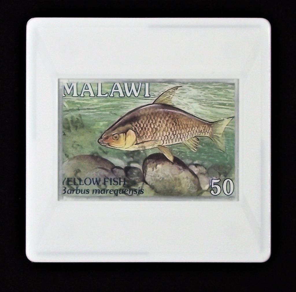 Yellowfish brooch - Labeobarbus maraquensis - Malawi
